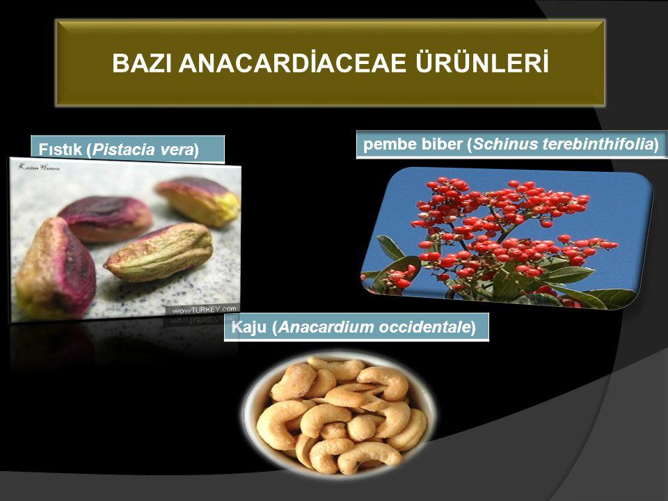BAZI ANACARDİACEAE ÜRÜNLERİ Fıstık (Pistacia vera) Kaju (Anacardium occidentale)