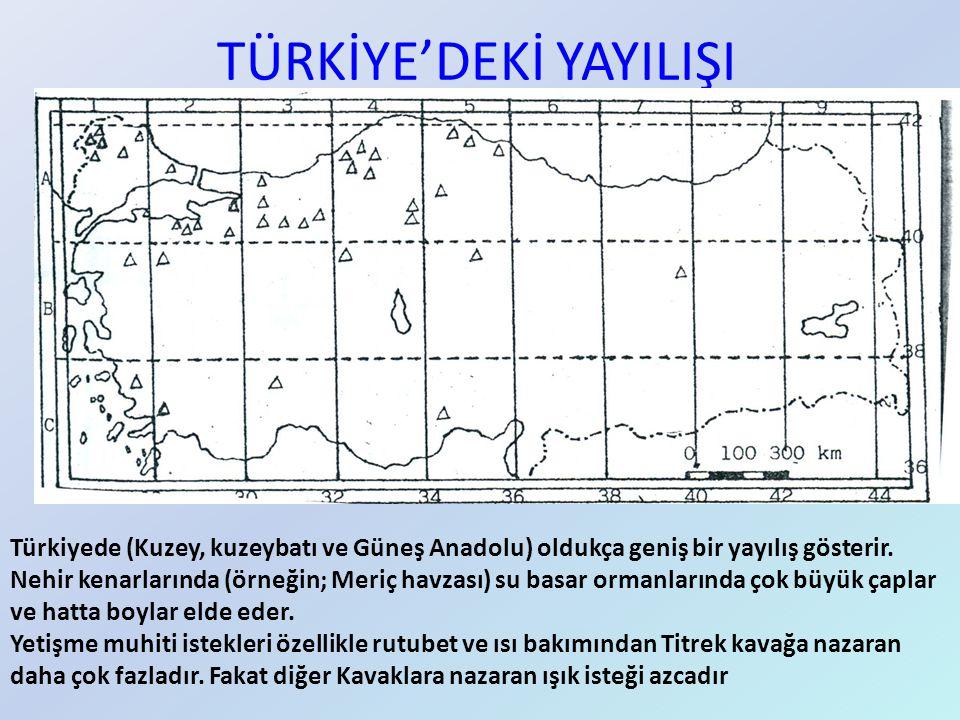 TÜRKİYE'DEKİ YAYILIŞI Türkiyede (Kuzey, kuzeybatı ve Güneş Anadolu) oldukça geniş bir yayılış gösterir. Nehir kenarlarında (örneğin; Meriç havzası) su
