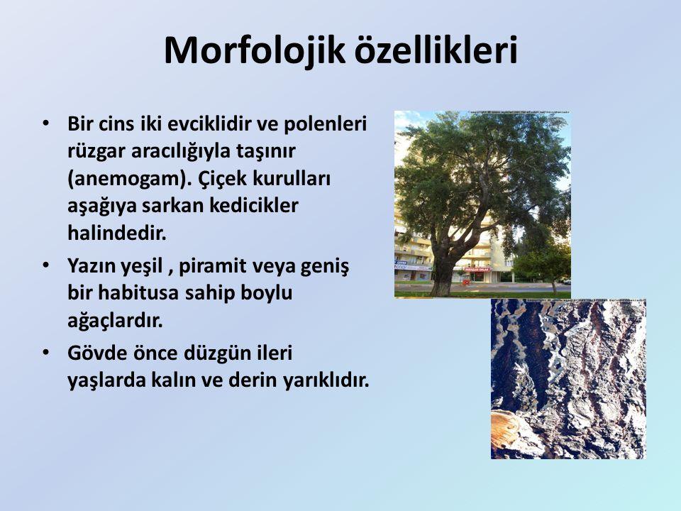  Titrekkavak Türkiye'de hemen her tarafta yayılmıştır; Doğu Anadolu'da özellikle Erzurum ve Erzincan yörelerinde Meşelerle birlikte oldukça geniş sahalar kaplar.