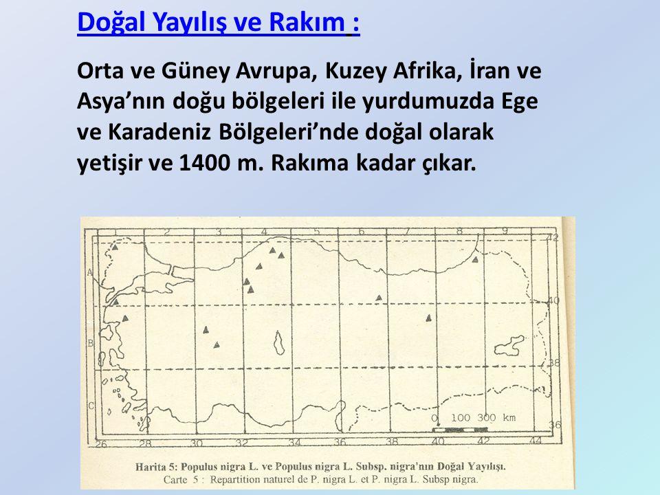 Doğal Yayılış ve Rakım : Orta ve Güney Avrupa, Kuzey Afrika, İran ve Asya'nın doğu bölgeleri ile yurdumuzda Ege ve Karadeniz Bölgeleri'nde doğal olara
