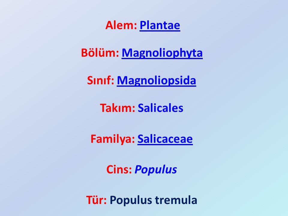 Alem: PlantaePlantae Bölüm: MagnoliophytaMagnoliophyta Sınıf: MagnoliopsidaMagnoliopsida Takım: Salicales Familya: SalicaceaeSalicaceae Cins: Populus