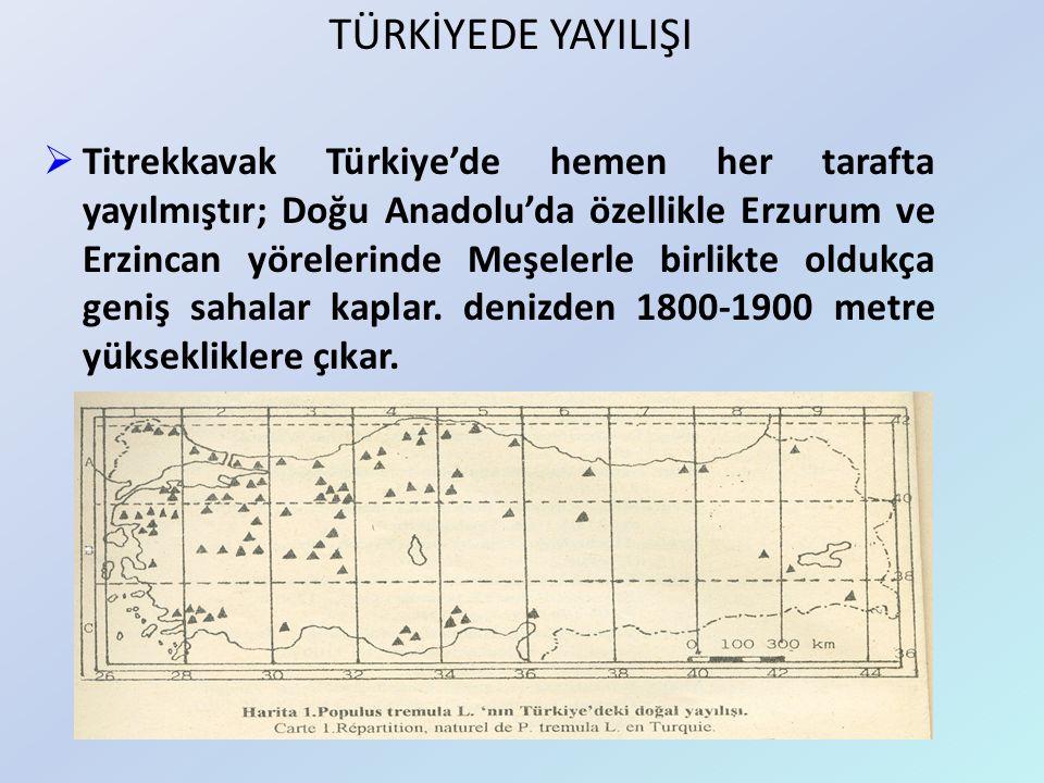  Titrekkavak Türkiye'de hemen her tarafta yayılmıştır; Doğu Anadolu'da özellikle Erzurum ve Erzincan yörelerinde Meşelerle birlikte oldukça geniş sah