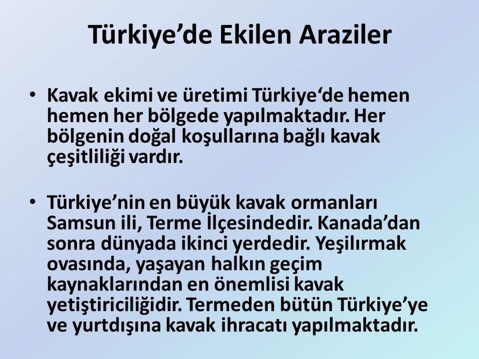 Türkiye'de Ekilen Araziler Kavak ekimi ve üretimi Türkiye'de hemen hemen her bölgede yapılmaktadır. Her bölgenin doğal koşullarına bağlı kavak çeşitli