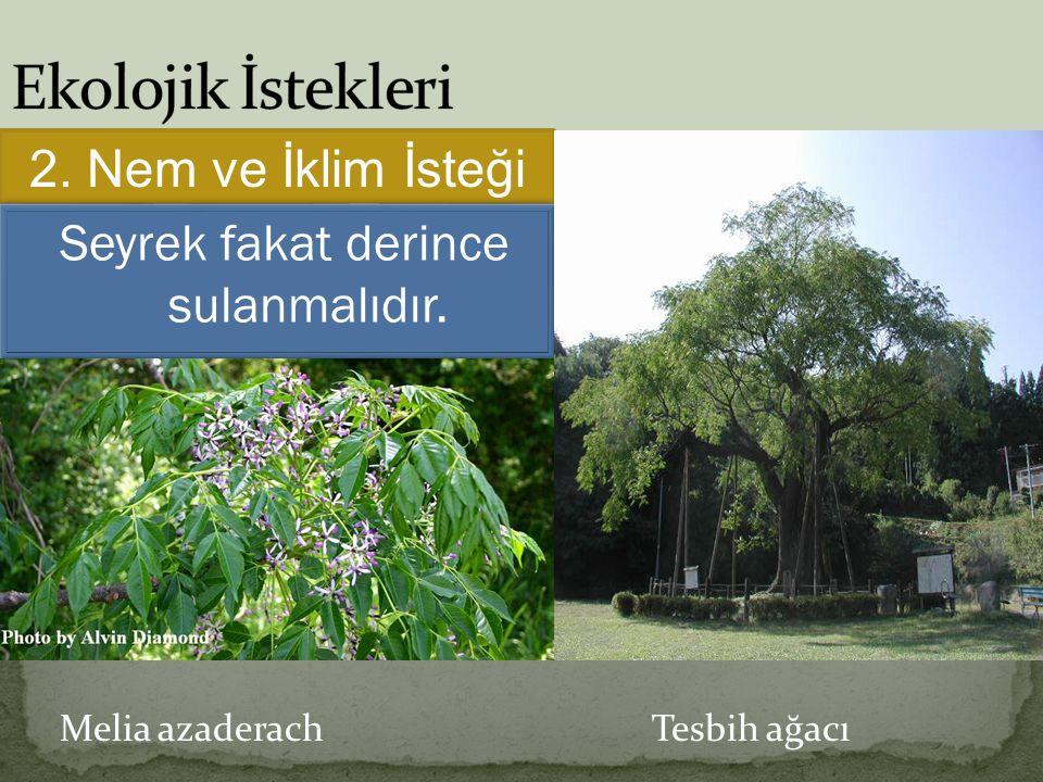 Melia azaderach Tesbih ağacı 2. Nem ve İklim İsteği Seyrek fakat derince sulanmalıdır.