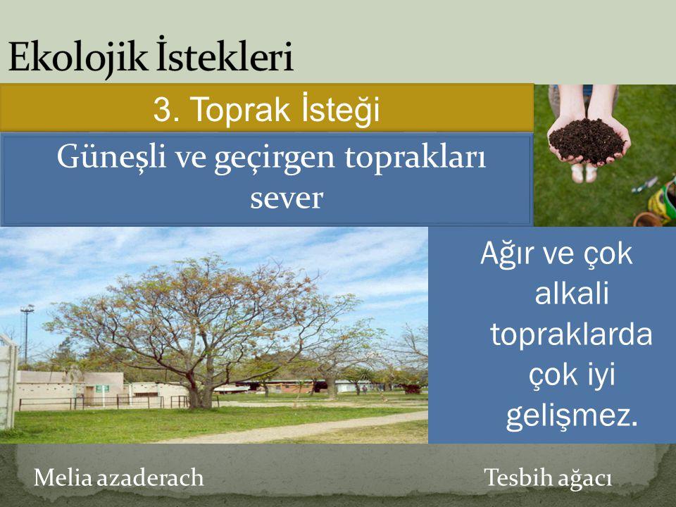 Melia azaderach Tesbih ağacı 3. Toprak İsteği Güneşli ve geçirgen toprakları sever Ağır ve çok alkali topraklarda çok iyi gelişmez.