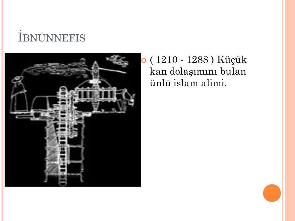 İ BNÜNNEFIS ( 1210 - 1288 ) Küçük kan dolaşımını bulan ünlü islam alimi.