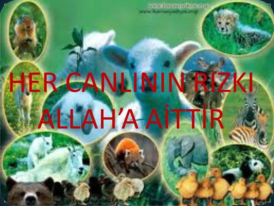 HER CANLININ RIZKI ALLAH'A AİTTİR