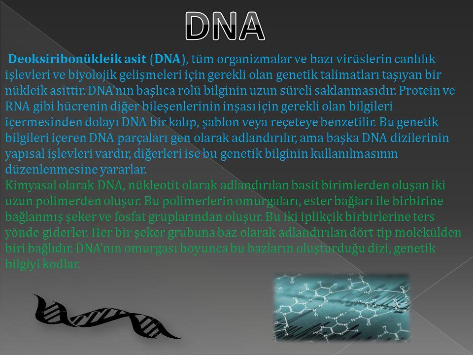 Deoksiribonükleik asit (DNA), tüm organizmalar ve bazı virüslerin canlılık işlevleri ve biyolojik gelişmeleri için gerekli olan genetik talimatları taşıyan bir nükleik asittir.