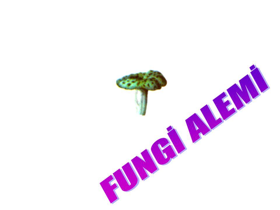 SPORLULARIN GENEL ÖZELLİKLERİ Plazmodyumun tüm türleri bu gruba girer. Hareket organelleri yoktur. Mitokondrileri bulunmaz ve tek hücreli sporlar meyd