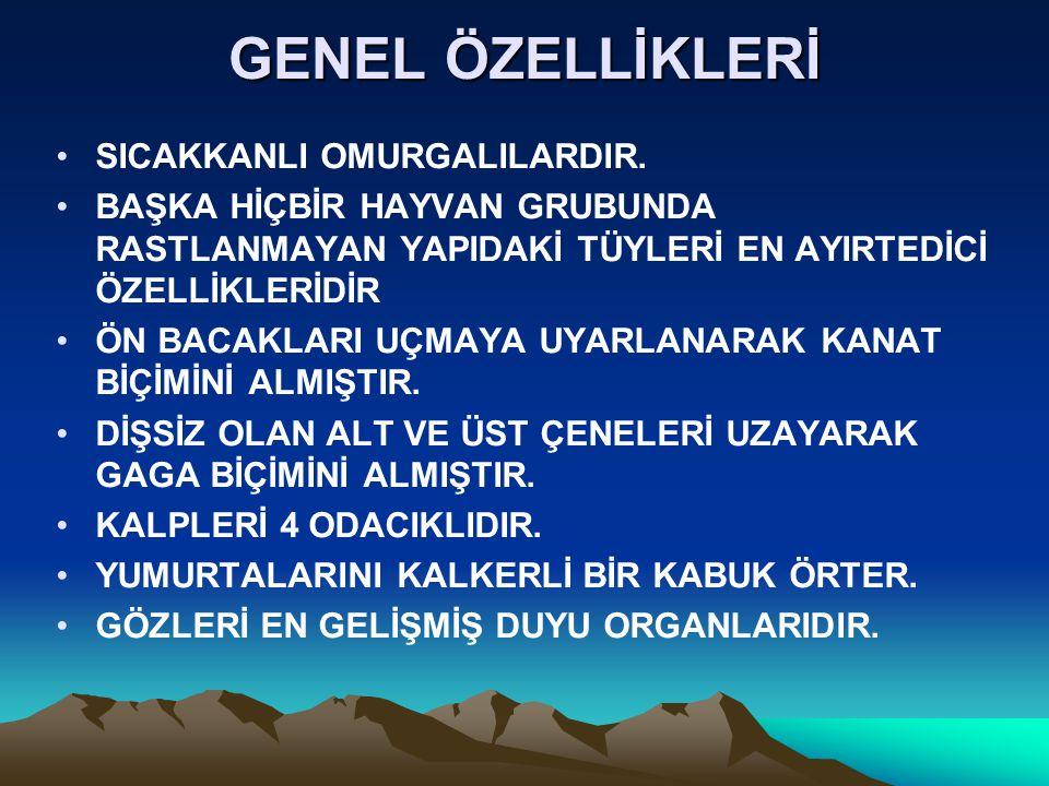 GENEL ÖZELLİKLERİ SICAKKANLI OMURGALILARDIR.