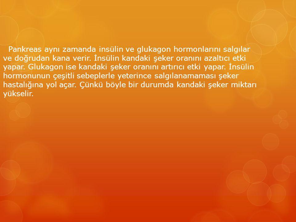 Pankreas aynı zamanda insülin ve glukagon hormonlarını salgılar ve doğrudan kana verir.