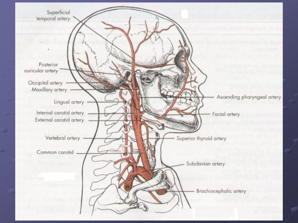 KB'nı ; kalbin atım volümü (CO), ejeksiyon hızı, arteriyel sistemin diyastol sonundaki volumü, arter duvarının esnekliği, periferik vasküler direnç (PVR) ve kanın viskositesi belirlese de ana faktörler CO ve PVR'dır.
