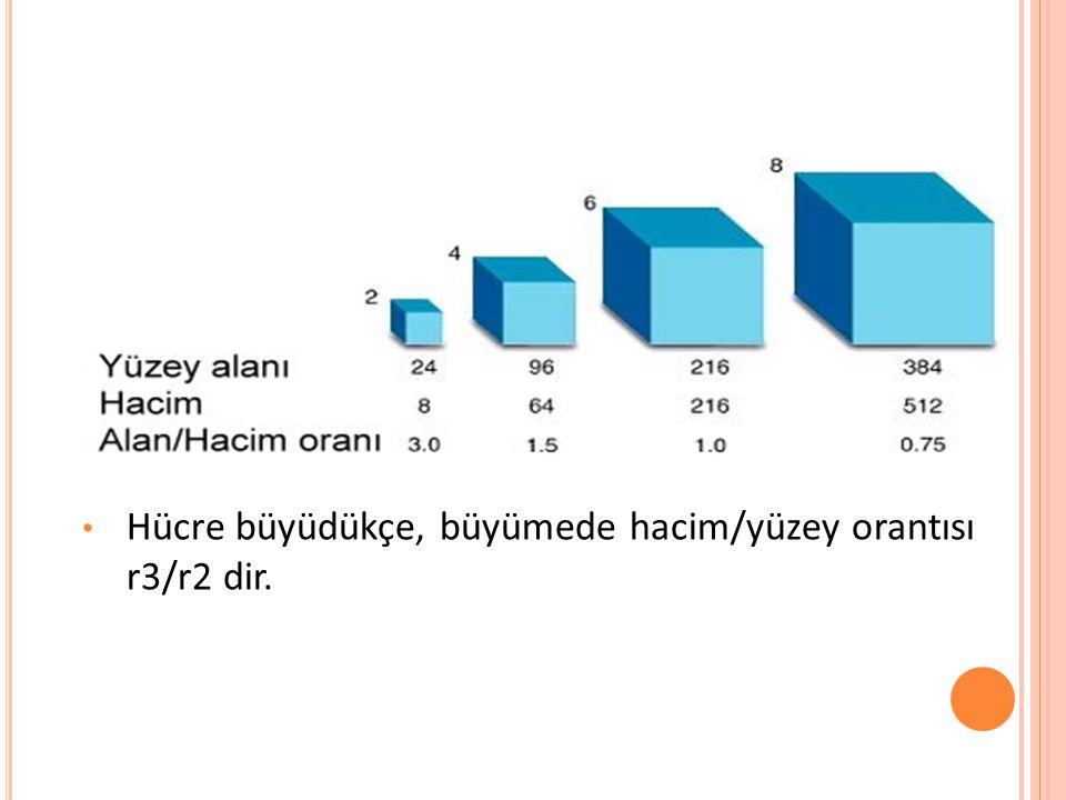 Hücre büyüdükçe, büyümede hacim/yüzey orantısı r3/r2 dir.