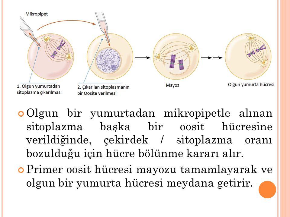Olgun bir yumurtadan mikropipetle alınan sitoplazma başka bir oosit hücresine verildiğinde, çekirdek / sitoplazma oranı bozulduğu için hücre bölünme k