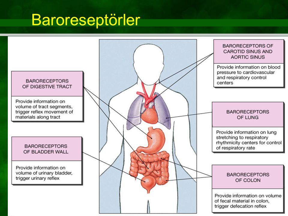 Figure 15.4 Baroreseptörler
