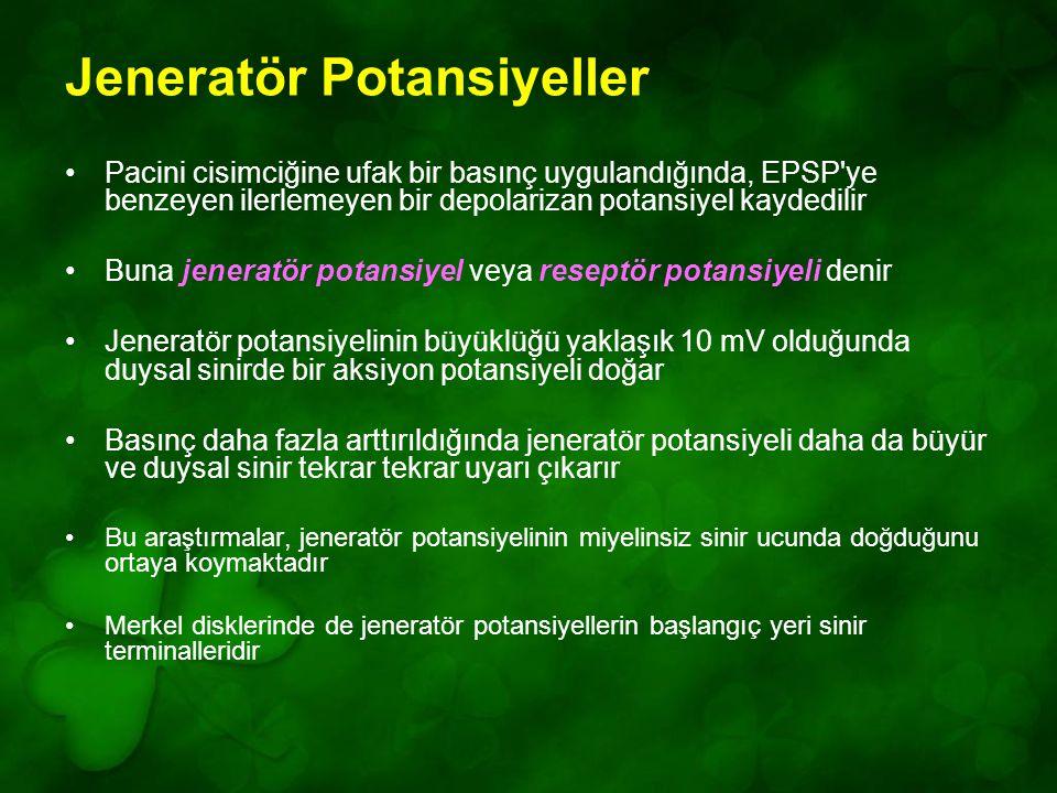 Jeneratör Potansiyeller Pacini cisimciğine ufak bir basınç uygulandığında, EPSP ye benzeyen ilerlemeyen bir depolarizan potansiyel kaydedilir Buna jeneratör potansiyel veya reseptör potansiyeli denir Jeneratör potansiyelinin büyüklüğü yaklaşık 10 mV olduğunda duysal sinirde bir aksiyon potansiyeli doğar Basınç daha fazla arttırıldığında jeneratör potansiyeli daha da büyür ve duysal sinir tekrar tekrar uyarı çıkarır Bu araştırmalar, jeneratör potansiyelinin miyelinsiz sinir ucunda doğduğunu ortaya koymaktadır Merkel disklerinde de jeneratör potansiyellerin başlangıç yeri sinir terminalleridir
