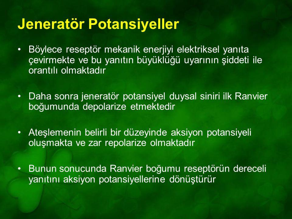Jeneratör Potansiyeller Böylece reseptör mekanik enerjiyi elektriksel yanıta çevirmekte ve bu yanıtın büyüklüğü uyarının şiddeti ile orantılı olmaktadır Daha sonra jeneratör potansiyel duysal siniri ilk Ranvier boğumunda depolarize etmektedir Ateşlemenin belirli bir düzeyinde aksiyon potansiyeli oluşmakta ve zar repolarize olmaktadır Bunun sonucunda Ranvier boğumu reseptörün dereceli yanıtını aksiyon potansiyellerine dönüştürür