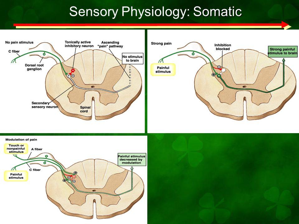 Somatic Sensory Physiology: Somatic