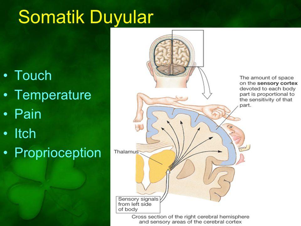 Touch Temperature Pain Itch Proprioception Somatik Duyular Figure 10-10: The somatosensory cortex