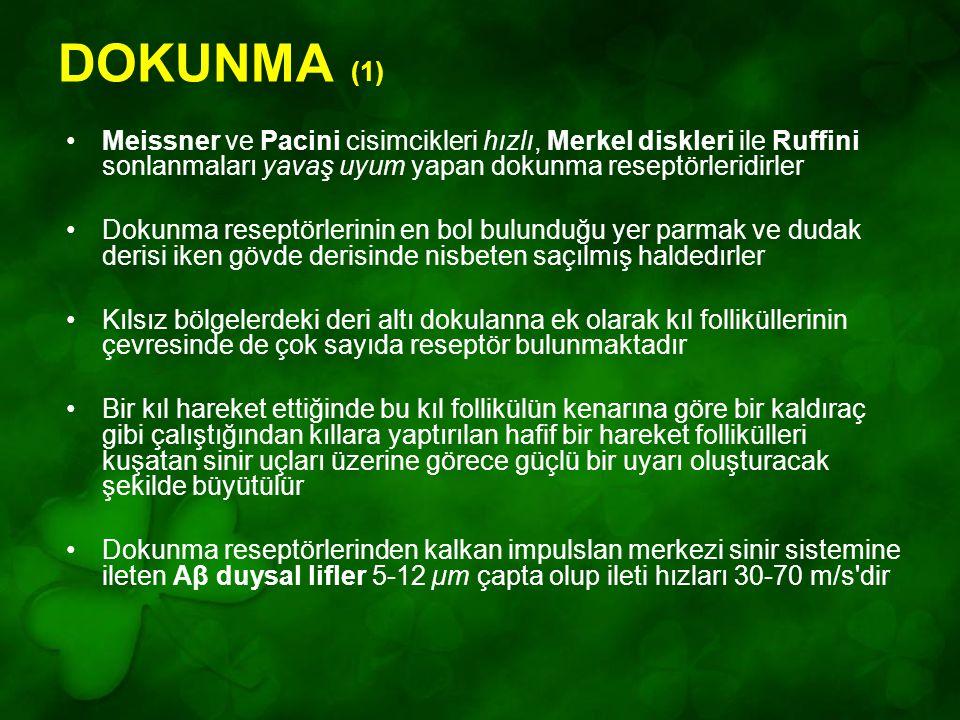 DOKUNMA (1) Meissner ve Pacini cisimcikleri hızlı, Merkel diskleri ile Ruffini sonlanmaları yavaş uyum yapan dokunma reseptörleridirler Dokunma resept