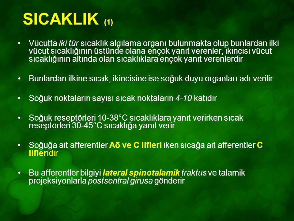 SICAKLIK (1) Vücutta iki tür sıcaklık algılama organı bulunmakta olup bunlardan ilki vücut sıcaklığının üstünde olana ençok yanıt verenler, ikincisi v