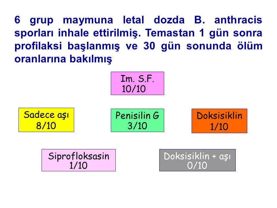 Temas Sonrası Profilaksi 6 grup maymuna letal dozda B.