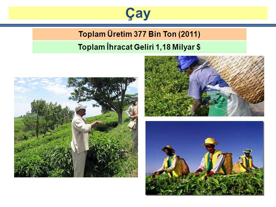 Toplam Üretim 377 Bin Ton (2011) Toplam İhracat Geliri 1,18 Milyar $ Çay