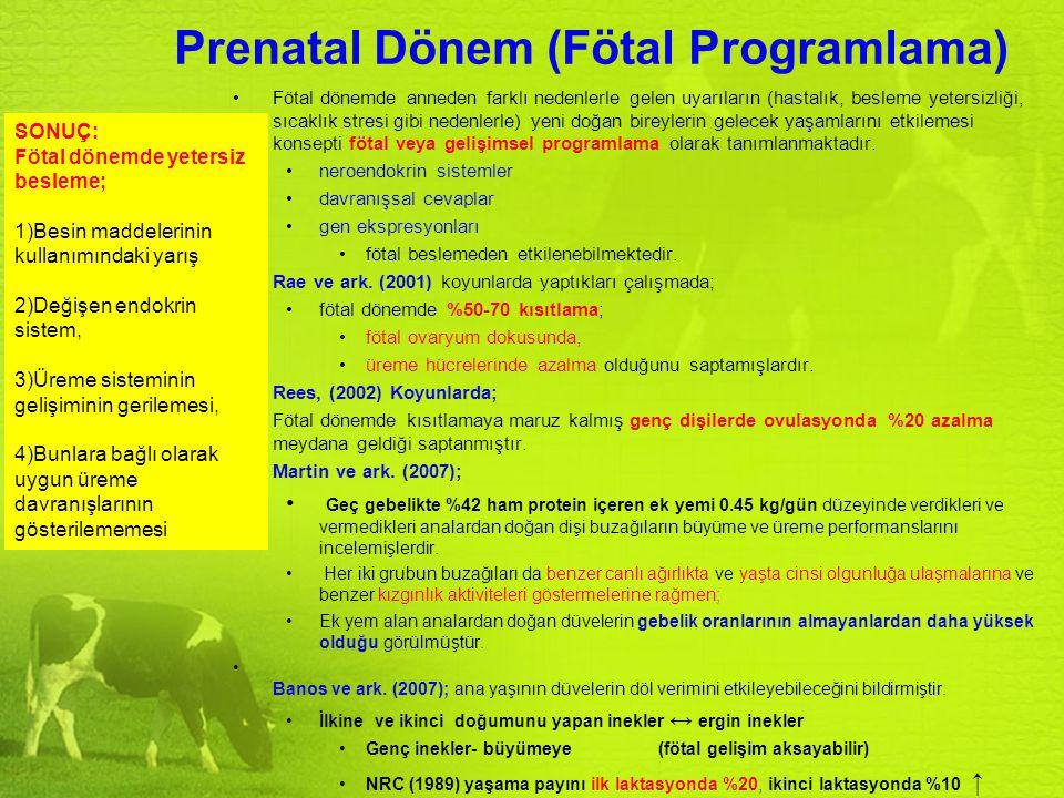 Prenatal Dönem (Fötal Programlama) Fötal dönemde anneden farklı nedenlerle gelen uyarıların (hastalık, besleme yetersizliği, sıcaklık stresi gibi nede