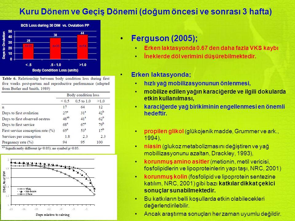 Kuru Dönem ve Geçiş Dönemi (doğum öncesi ve sonrası 3 hafta) Ferguson (2005); Erken laktasyonda 0.67 den daha fazla VKS kaybı İneklerde döl verimini d