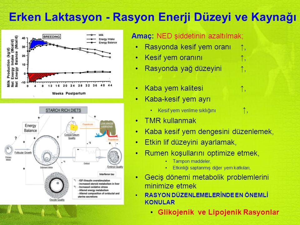 Erken Laktasyon - Rasyon Enerji Düzeyi ve Kaynağı Amaç: NED şiddetinin azaltılmak; Rasyonda kesif yem oranı ↑, Kesif yem oranını ↑, Rasyonda yağ düzey