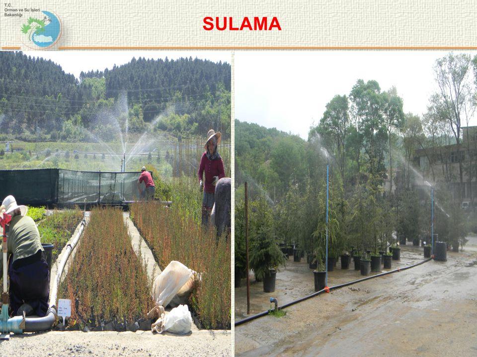 SULAMA 10