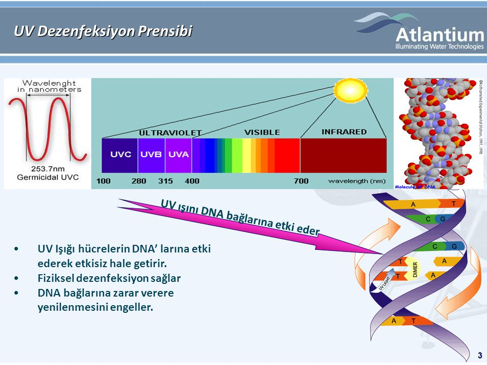 3 UV Dezenfeksiyon Prensibi 3 UV Işığı hücrelerin DNA' larına etki ederek etkisiz hale getirir.