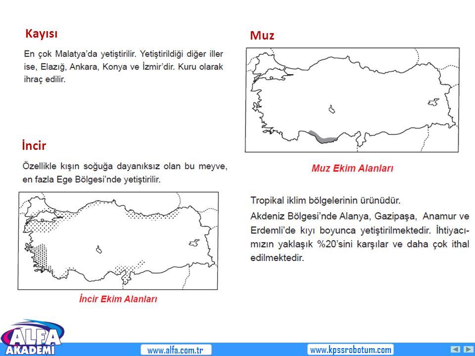Kayısı İncir www.alfa.com.tr www.kpssrobotum.com Muz