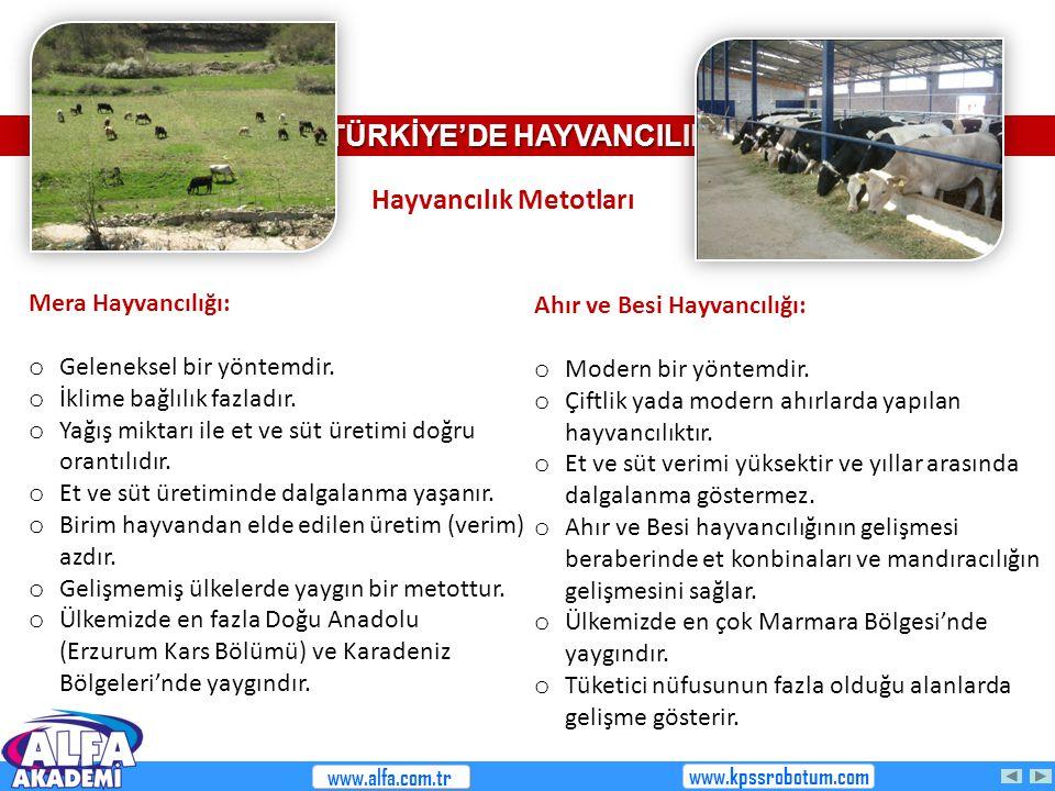 TÜRKİYE'DE HAYVANCILIK Ahır ve Besi Hayvancılığı: o Modern bir yöntemdir. o Çiftlik yada modern ahırlarda yapılan hayvancılıktır. o Et ve süt verimi y