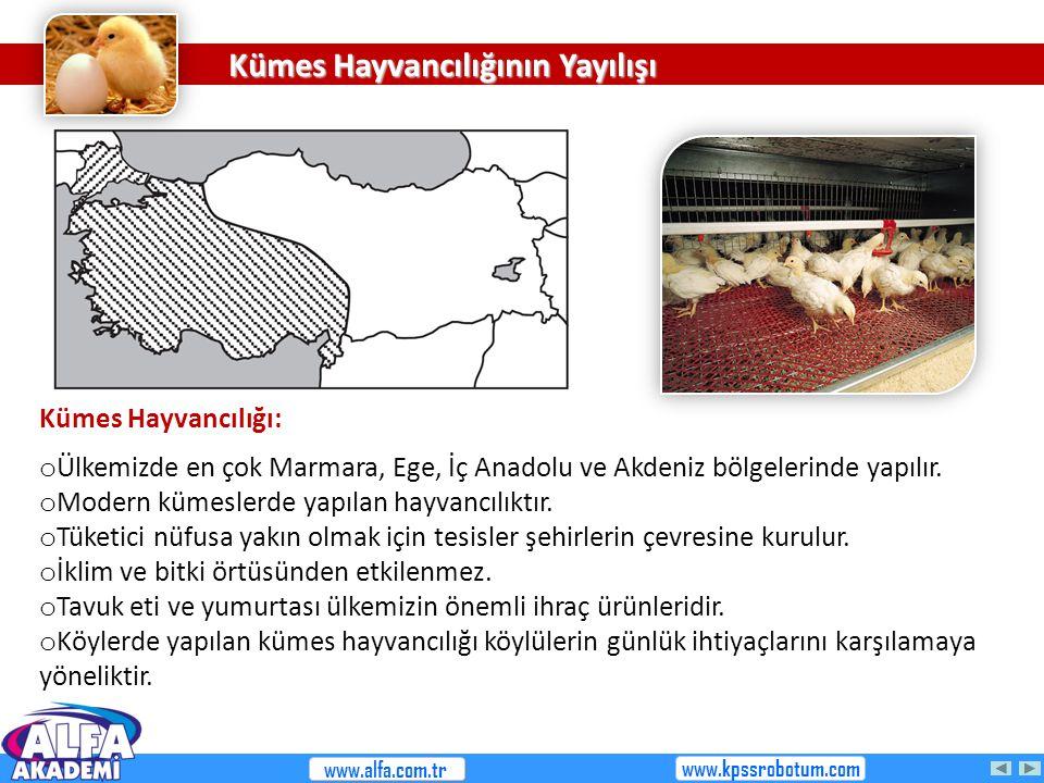 Kümes Hayvancılığının Yayılışı Kümes Hayvancılığı: o Ülkemizde en çok Marmara, Ege, İç Anadolu ve Akdeniz bölgelerinde yapılır. o Modern kümeslerde ya
