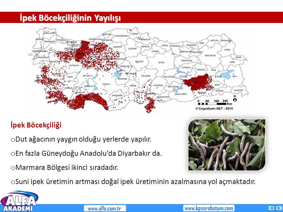 İpek Böcekçiliği o Dut ağacının yaygın olduğu yerlerde yapılır. o En fazla Güneydoğu Anadolu'da Diyarbakır da. o Marmara Bölgesi ikinci sıradadır. o S