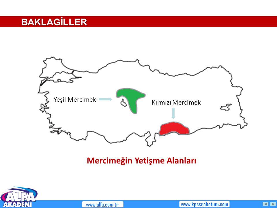 Kırmızı Mercimek Yeşil Mercimek BAKLAGİLLER Mercimeğin Yetişme Alanları www.alfa.com.tr www.kpssrobotum.com