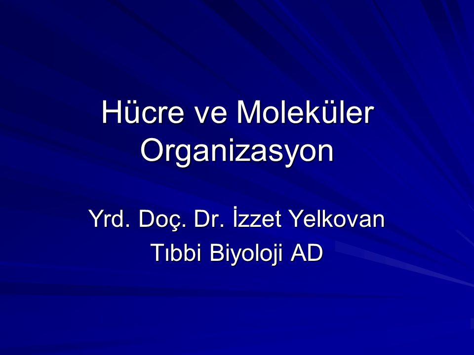 Hücre ve Moleküler Organizasyon Yrd. Doç. Dr. İzzet Yelkovan Tıbbi Biyoloji AD