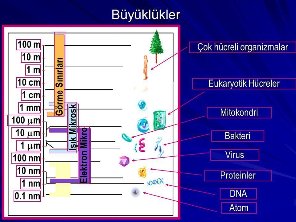 100 m 10 m 1 m 10 cm 1 cm 1 mm 100  m 10  m 1  m 100 nm 10 nm 1 nm 0.1 nm Elektron Mikro Işık Mikrosk Görme Sınırları Eukaryotik Hücreler Mitokondr