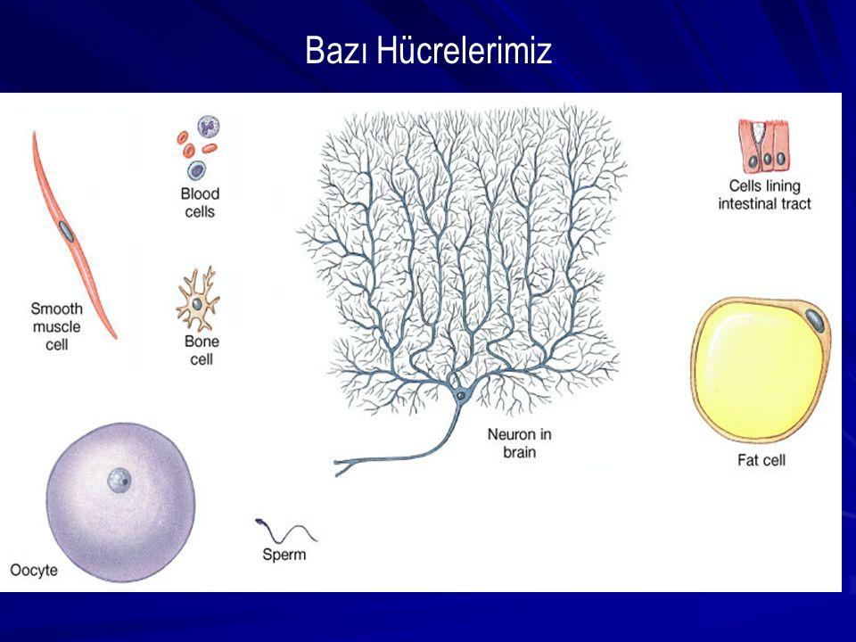 Bazı Hücrelerimiz