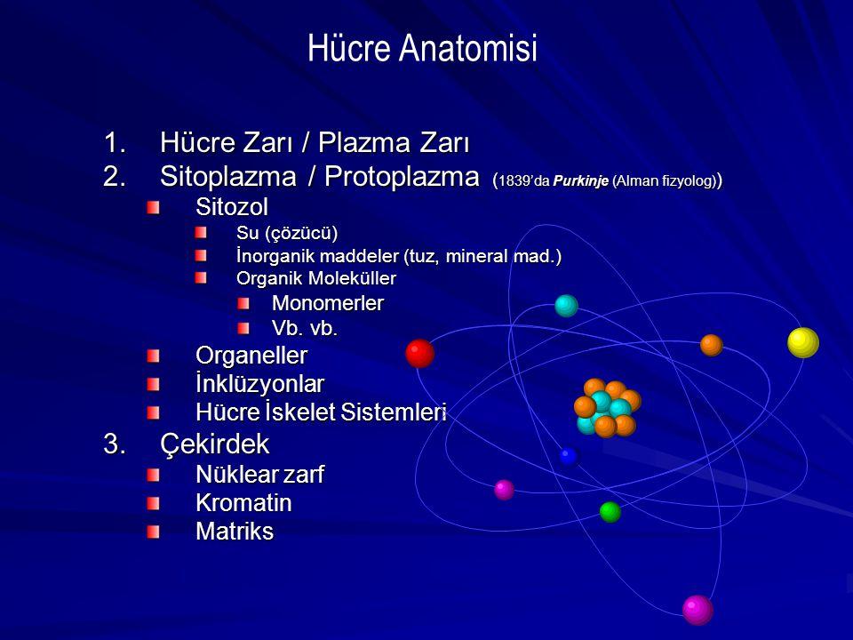 1.Hücre Zarı / Plazma Zarı 2.Sitoplazma / Protoplazma ( 1839'da Purkinje (Alman fizyolog) ) Sitozol Su (çözücü) İnorganik maddeler (tuz, mineral mad.)