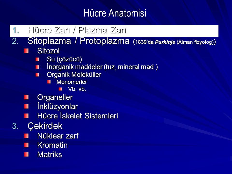 1. Hücre Zarı / Plazma Zarı 2. Sitoplazma / Protoplazma ( 1839'da Purkinje (Alman fizyolog) ) Sitozol Su (çözücü) İnorganik maddeler (tuz, mineral mad