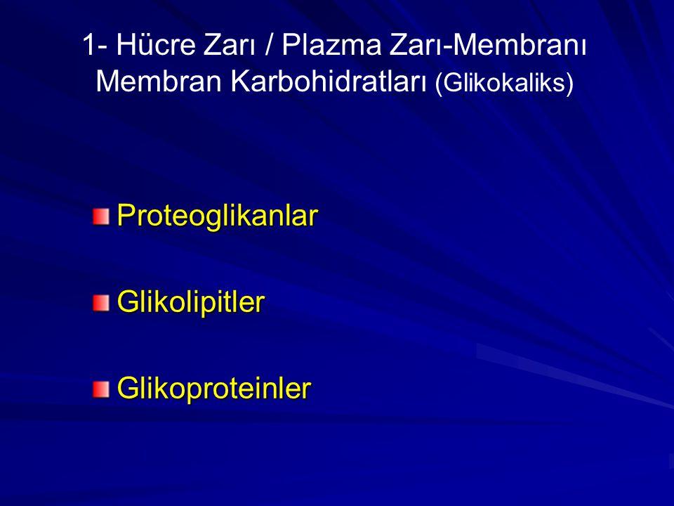 1- Hücre Zarı / Plazma Zarı-Membranı Membran Karbohidratları (Glikokaliks) Proteoglikanlar Glikolipitler Glikoproteinler