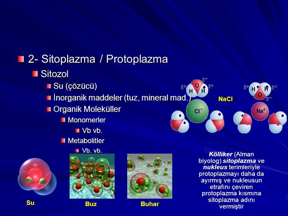 2- Sitoplazma / Protoplazma Sitozol Su (çözücü) İnorganik maddeler (tuz, mineral mad.) Organik Moleküller Monomerler Vb vb. Metabolitler Vb. vb. Buhar