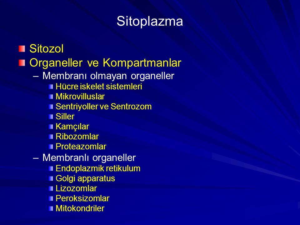 Sitozol Organeller ve Kompartmanlar – –Membranı olmayan organeller Hücre iskelet sistemleri Mikrovilluslar Sentriyoller ve Sentrozom Siller Kamçılar R