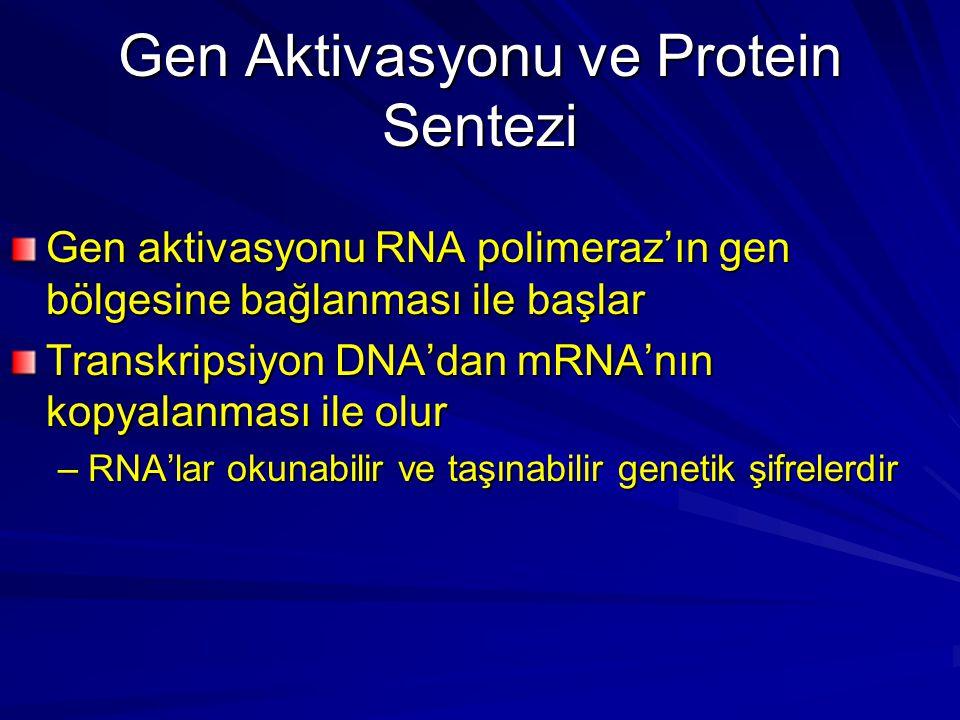 Gen aktivasyonu RNA polimeraz'ın gen bölgesine bağlanması ile başlar Transkripsiyon DNA'dan mRNA'nın kopyalanması ile olur –RNA'lar okunabilir ve taşı