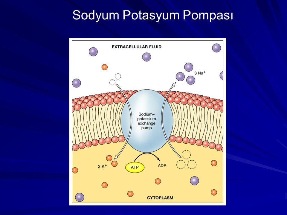Sodyum Potasyum Pompası