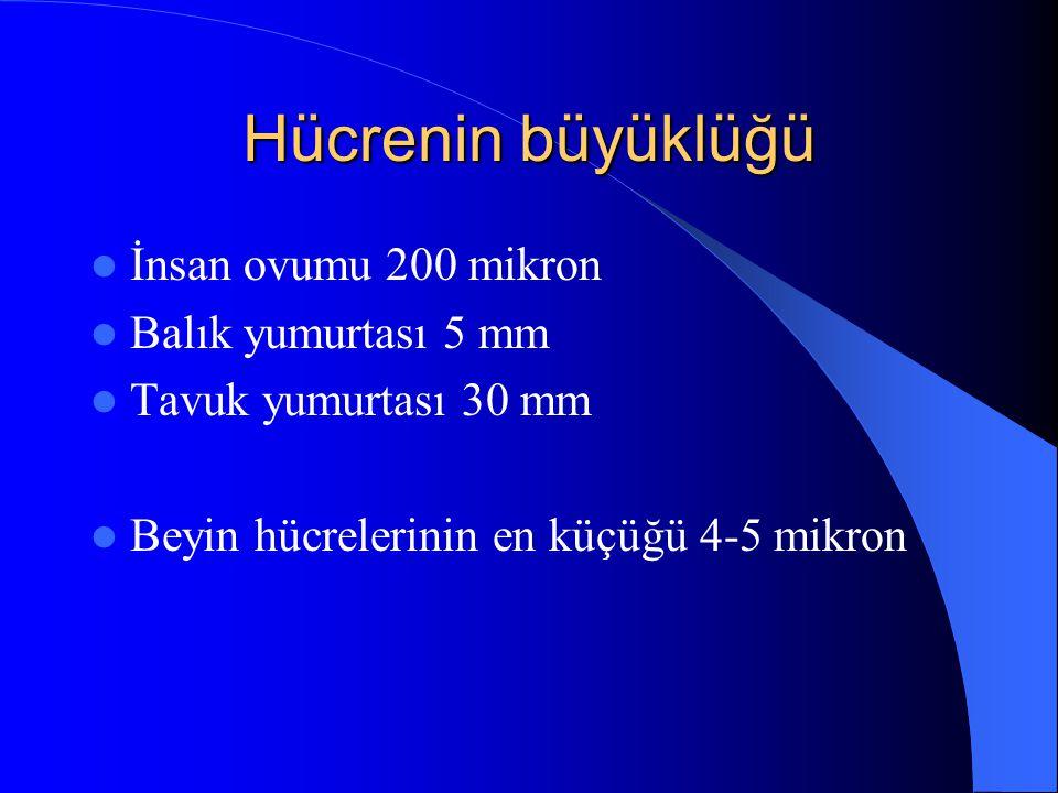 Hücrenin büyüklüğü İnsan ovumu 200 mikron Balık yumurtası 5 mm Tavuk yumurtası 30 mm Beyin hücrelerinin en küçüğü 4-5 mikron