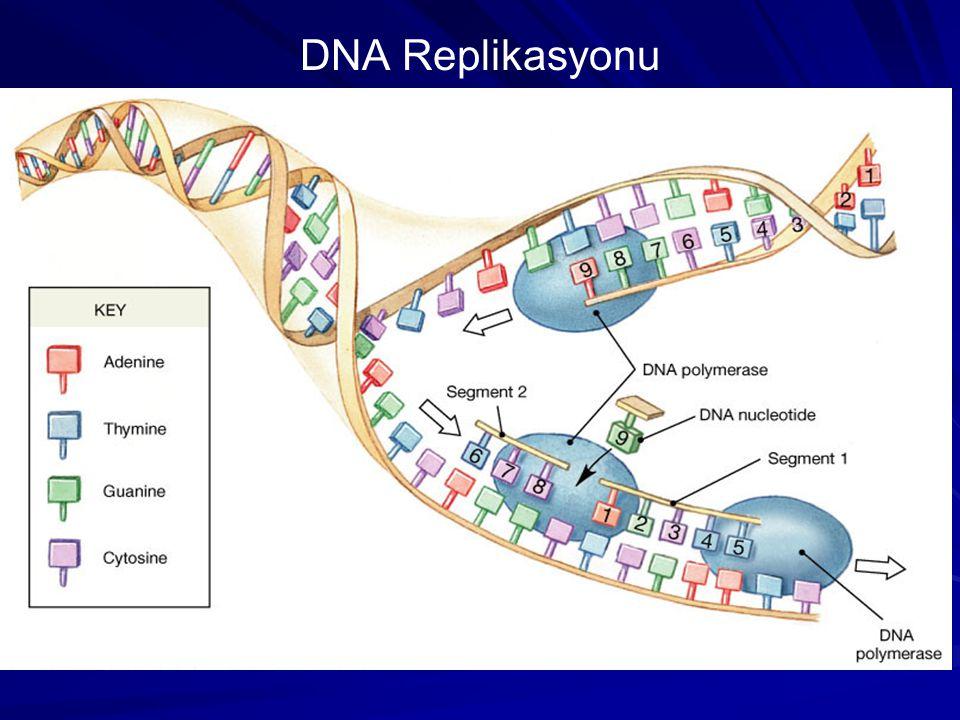 DNA Replikasyonu