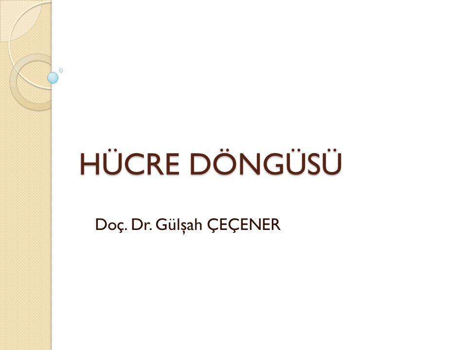 HÜCRE DÖNGÜSÜ Doç. Dr. Gülşah ÇEÇENER